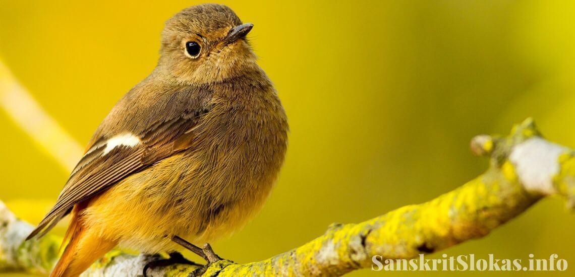 Sanskrit essay on Bird