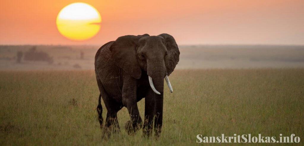 Sanskrit essay on elephant